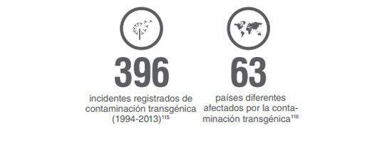 transgenicos5