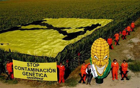 Protesta de Greenpeace contra los cultivos transgénicos.