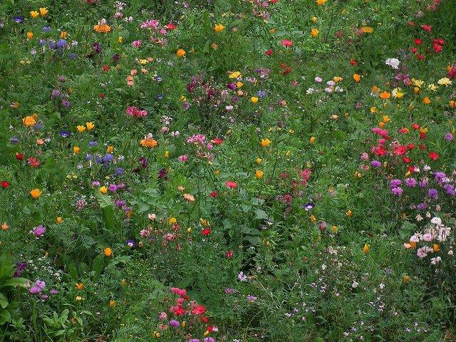Campo donde buscar las mejores flores