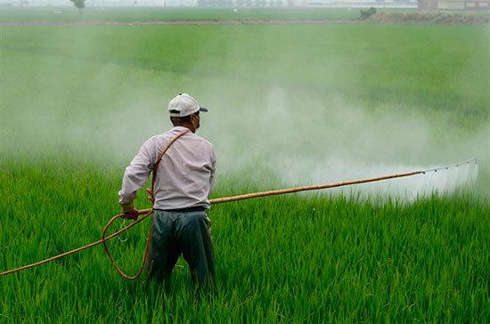 Toda la familia de pesticidas ampliamente utilizados, conocidos comoorganofosfatos (OP), causan daño cerebral en los niños, incluso a niveles bajos de exposición, y debe eliminarse gradualmente